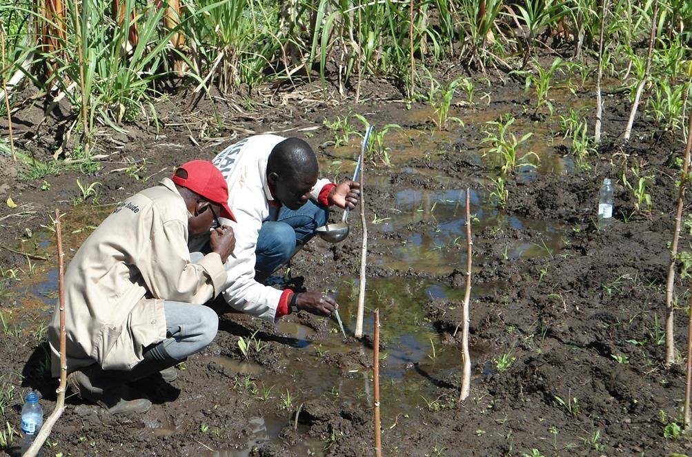 Entomologists collect mosquito larvae in Mozambique.